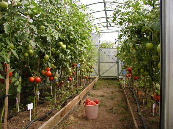 Теплицы своими руками для помидор