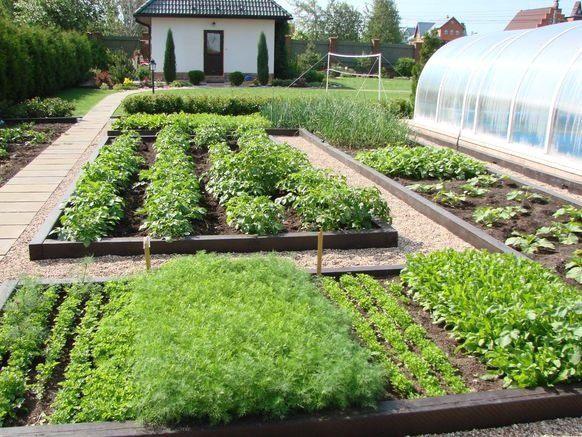 сорняки огорода фото и названия