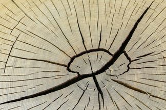 «Нам повезло поучаствовать в  программе «Квартирный вопрос», — основатели бренда Woodberry о любви к дереву и сложным экспериментам