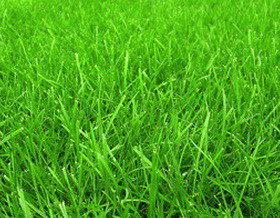 Как сделать идеальный газон?