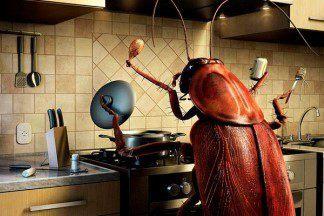 Нежданные гости: как избавиться от тараканов в квартире?