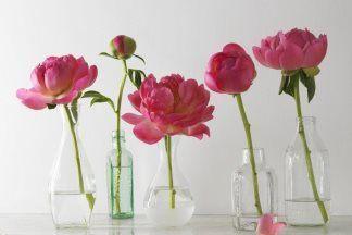 Лучшие сорта пионов - цветы, которые вдохновляют