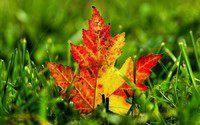 Ваш идеальный осенний сад: идеи для вдохновения