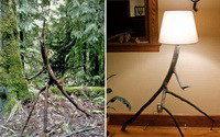 Пустить корни, Или лампа из коряги