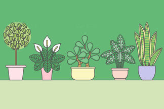 Красота в каждую комнату: 9 растений, которые не требуют особого ухода
