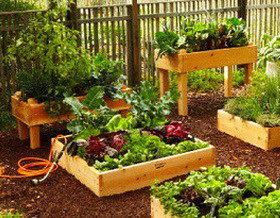Декоративный огород или эксклюзивные грядки своими руками