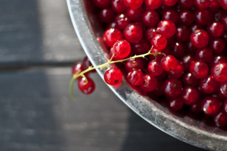 Лучшие сорта красной смородины - описания и фото