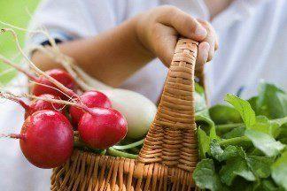Секреты выращивания редиса в теплице