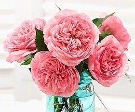 Как вырастить розы?