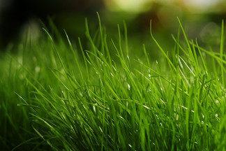 Эксперт по ландшафту Роман  Агунович рассказывает о  тонкостях создания идеального газона и ухода за  ним