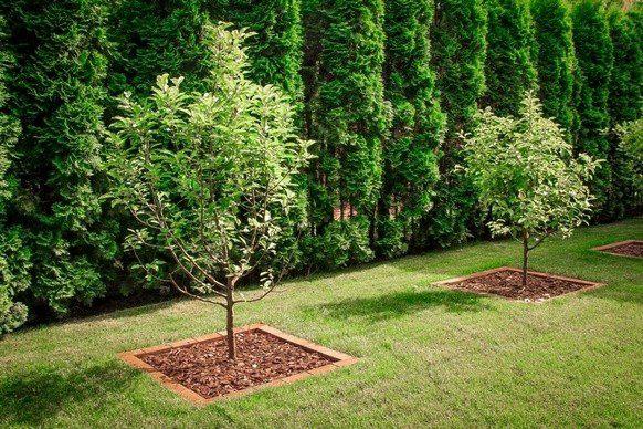 посадка деревьев около дома