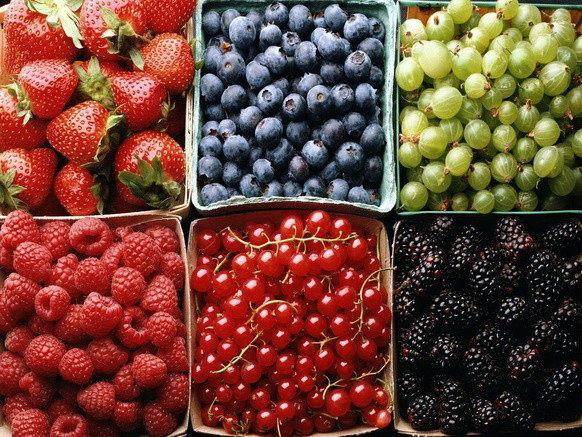 какие ягоды посадить