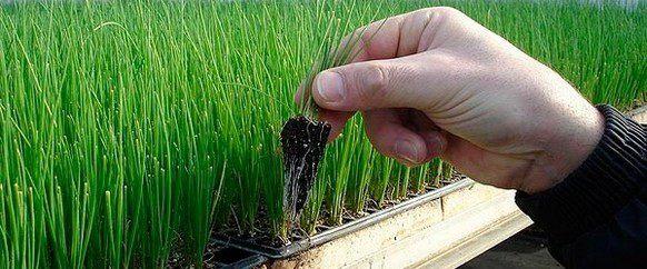 Своими руками горшки для растений