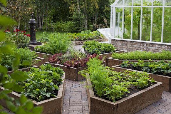 Декоративный огород дизайн грядок