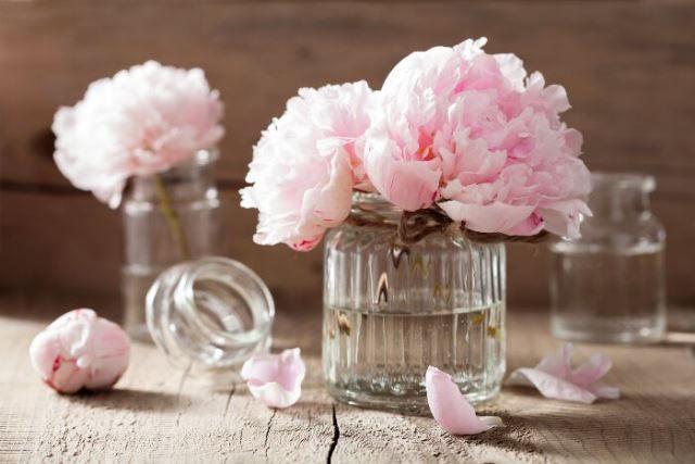 Пионы розовые сорта фото, названия, описание